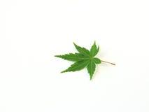 leaf Royaltyfri Bild