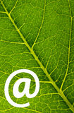Leaf. Green leaf texture with @ sign Royalty Free Stock Photography