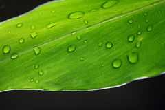 Leaf. Detailed greenish leaf macro shot - leaves in evening Royalty Free Stock Photo