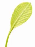 Leaf. Close up of a leaf stock image