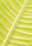 Leaf. Close up of a leaf stock photography