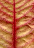 Leaf. Close up of a leaf Stock Photos