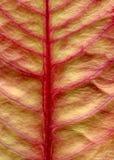 Leaf. Close up of a leaf stock photos