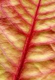 Leaf. Close up of a leaf Stock Images