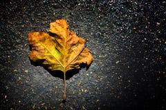 Leaf. Autumnal leaf on a road stock photos