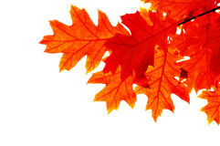 Free Leaf Stock Photos - 6498073