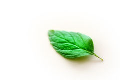 Leaf. A green mint leaf on white background Royalty Free Stock Image