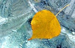 Leaf. Yellow leaf on headlamp of a car stock photo