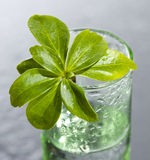 Leaf. There is leaf in the glass .still-lafe Royalty Free Stock Image