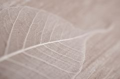 Leaf. White leaf on the table Royalty Free Stock Photo