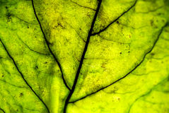 Leaf. Series with different colors and contrast Royalty Free Stock Photo
