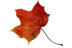 Leaf 8 Stock Images