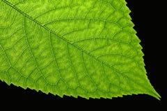 Leaf. Close up macro Stock Images