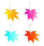 Leaf. Four seasons are described with colorful leaves Royalty Free Stock Photo