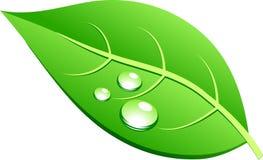 Leaf. Stock Images
