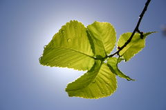 Leaf. With sky in background Royalty Free Stock Photos