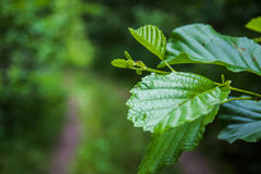 leaf Arkivfoto