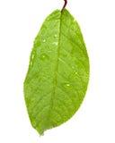 leaf Arkivbilder