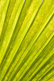 Leaf Abstract Royalty Free Stock Photography
