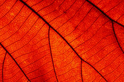 Free Leaf Abstract Stock Images - 32898284