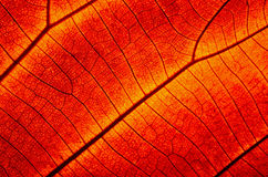 Free Leaf Abstract Royalty Free Stock Image - 33566456