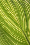 Leaf abstract. Green and white Leaf abstract Royalty Free Stock Photos