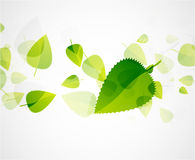Leaf abstract background Royalty Free Stock Photography