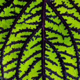 Leaf Abstract Stock Image