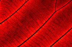 Leaf abstract Stock Photo