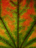Leaf abstract illustration Royalty Free Stock Image