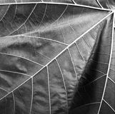Leaf abstract Royalty Free Stock Image