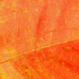 Leaf abstract Royalty Free Stock Photos