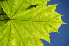 Leaf against blue sky Royalty Free Stock Images