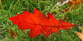 Leaf alone Royalty Free Stock Photo