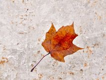 Leaf Royalty Free Stock Images