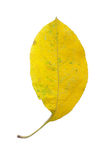 A Leaf of an apple tree Stock Photo