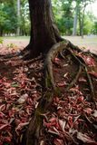 Leaf around tree stock photos