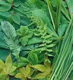 Leaf Arrangement. An arrangement of leaves Royalty Free Stock Images