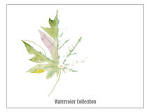 Leaf art watercolor  vector illustrations Royalty Free Stock Photo