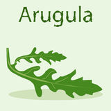 Leaf of arugula at the light green background. Hand drawn word Arugula Royalty Free Stock Images