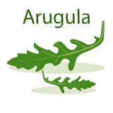 Leaf of arugula at the light green background. Leaf of arugula at the light green background with hand drawn word Arugula. Draw your salad yourself Royalty Free Stock Photos