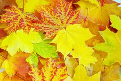 Leaf As Background Royalty Free Stock Image