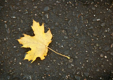 Leaf on Asphalt. Single leaf on asphalt trail royalty free stock photos