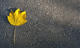 Leaf and asphalt Stock Photography