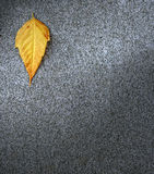 Leaf on asphalt Stock Photo