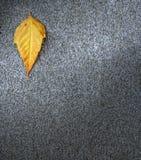 Leaf on asphalt Stock Photo