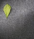 Leaf on asphalt Stock Image