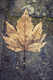 Leaf on asphalt Stock Photos