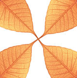 Leaf Attached Design Stock Photography