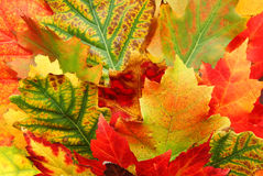 Leaf of autumn Stock Photo